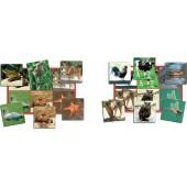 loto de palavras animais - 20526
