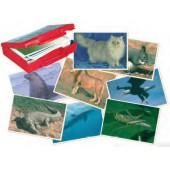 Fotografias de animais 20505