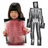 Ve o esqueleto 3832004