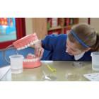 Modelo de higiene dentária - secont