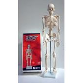 Esqueleto de85 cm